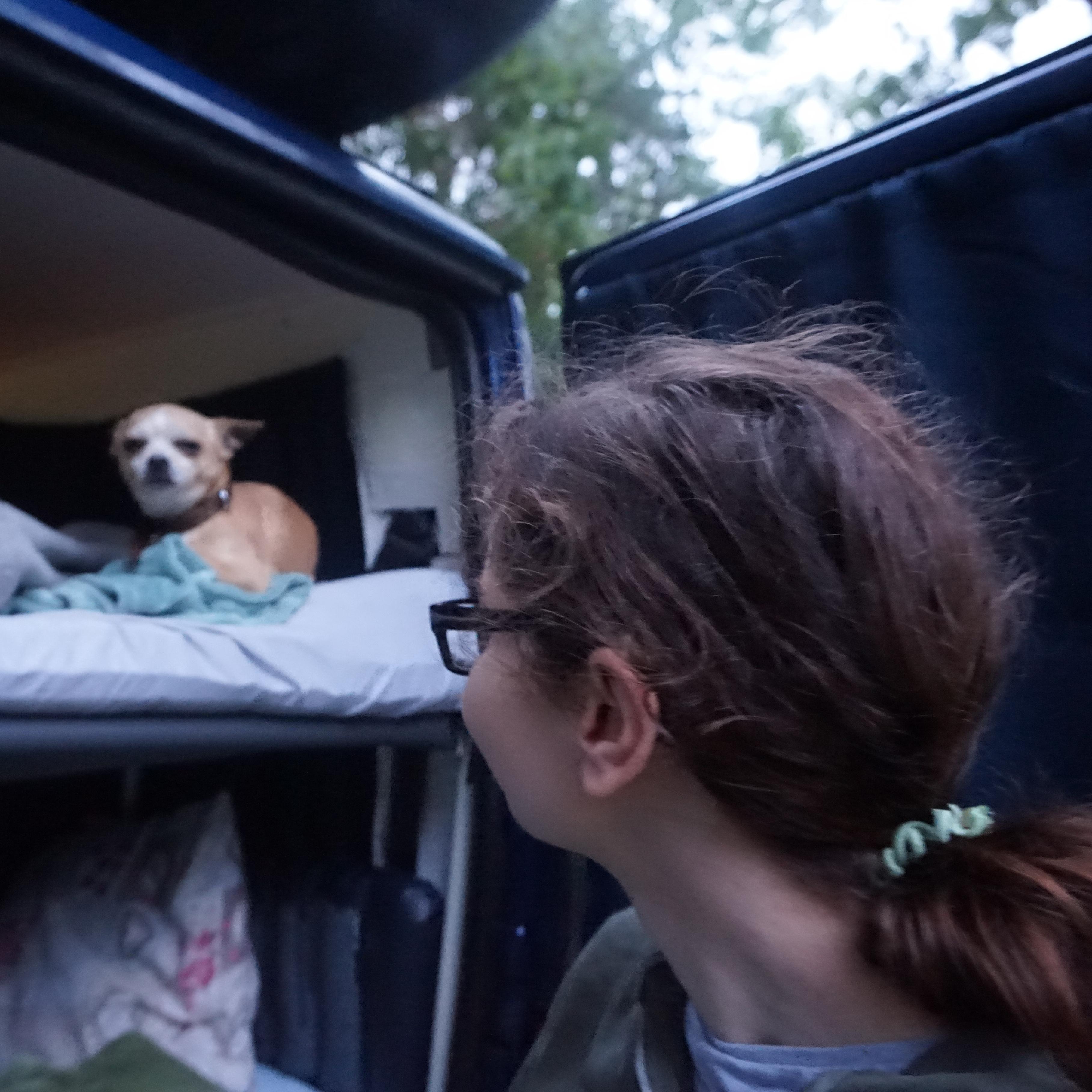 Dog on camper van bed