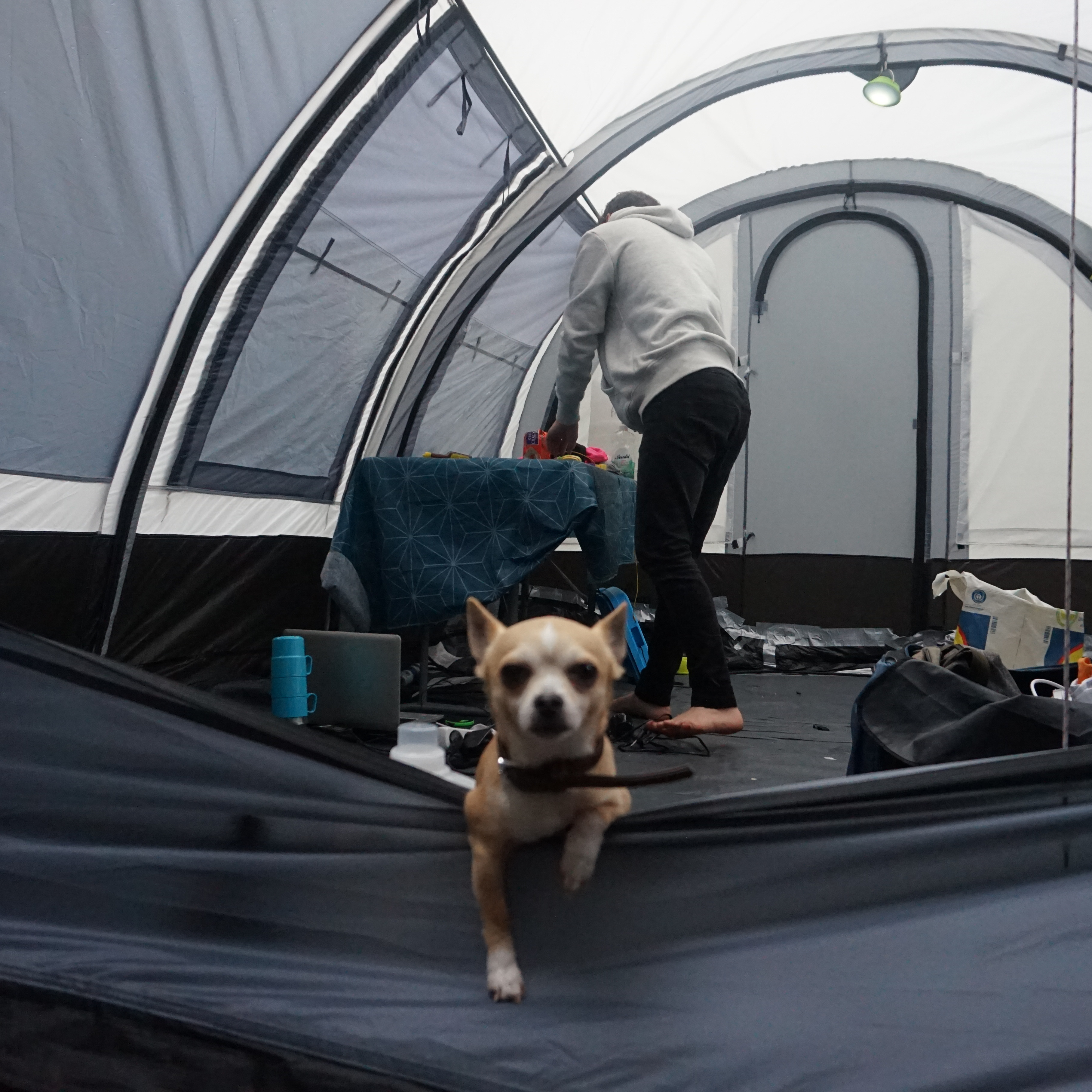 Dog in center of the tent